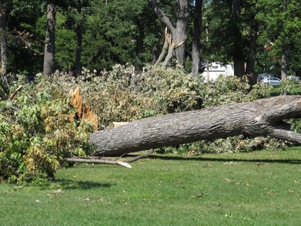 Picture of a split fallen tree from storm damage in Manassas, VA